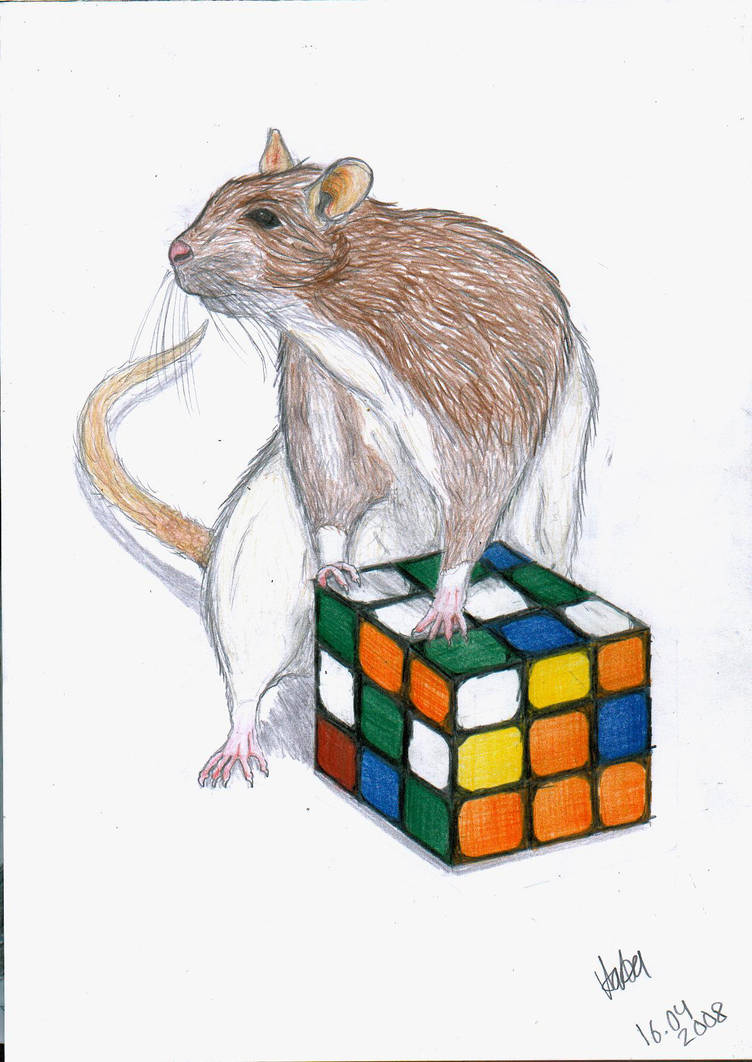 Rat by It-is-Madness