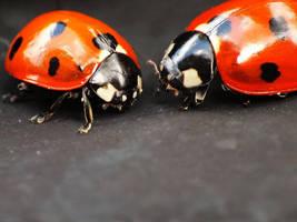Ladybugs II by Elvira1990