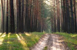 Magic forest by mannromann