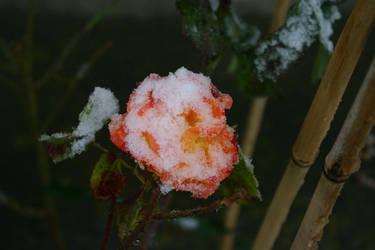 frozen love by DracoLumina