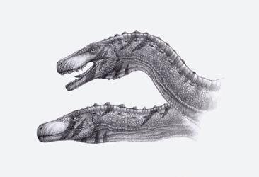 Herrerasaurus ischigualastensis by SpinoJP