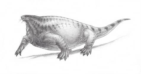 Cotylorhynchus by SpinoJP