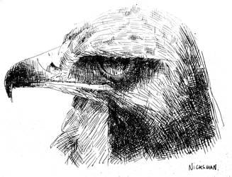 Eagle black pen by Nicksman24