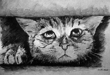 Kitten by Nicksman24