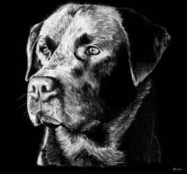 Dog by Nicksman24
