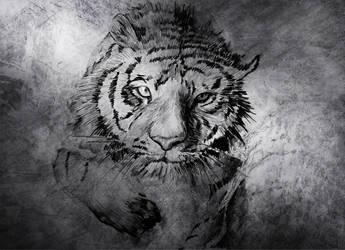 Tiger - Drawing by Nicksman24