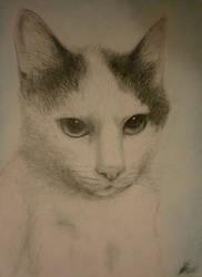 He was my little cat, Mulder by DanaMitzy