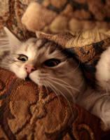 When Good Kitties Go Bad no. 1 by Mischi3vo