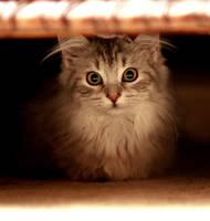 Hidden Kitten no. 2 by Mischi3vo