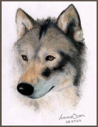 Another Wolf.. by Venilia