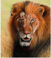 Lion study by Venilia