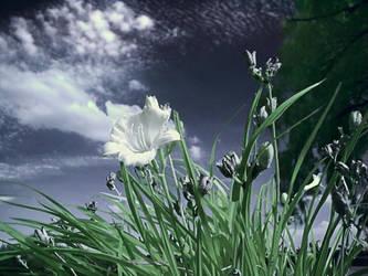 A Flower by electricjonny