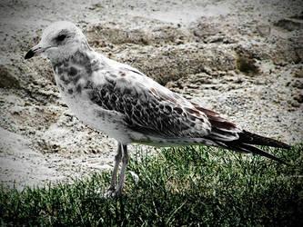 Bird by electricjonny