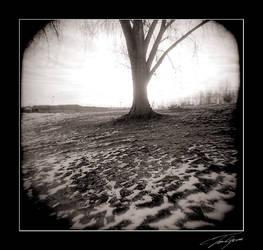 holga sun behind tree by electricjonny