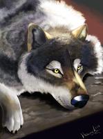 wolf by HavickArt