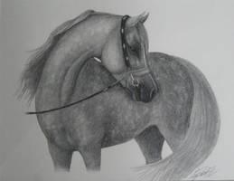 Arabian Horse by WoodstockLover8