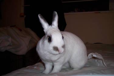 Mickey  little bunny by ailgara