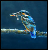 Kingfisher by Reza-malinova