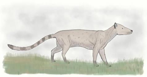 Mesonyx obtusidens by casielles
