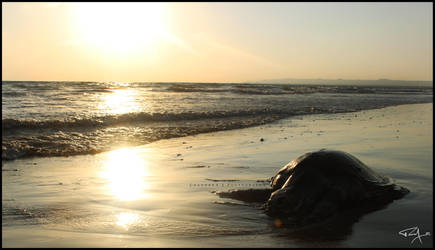 Turtle by l-CHAUDHRY-l