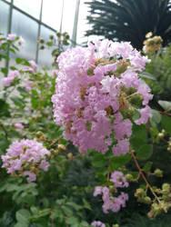 beautiful flower by Vreya