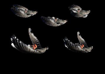 Dead Birds Stock Photos  4023 PNG by annamae22