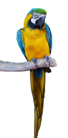 Tropical Parrot Stock Photo 0812 PNG by annamae22