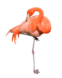 Flamingo Stock Photo 0319 PNG by annamae22