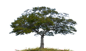 Tree Stock Photo 0007 PNG copy 2 by annamae22