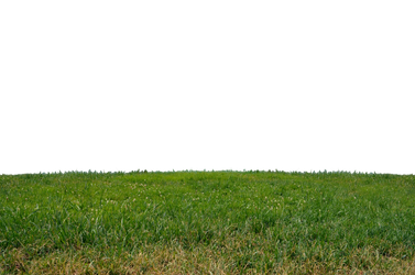 Grass At Park 2 Stock Photo Orig Png 0160 by annamae22