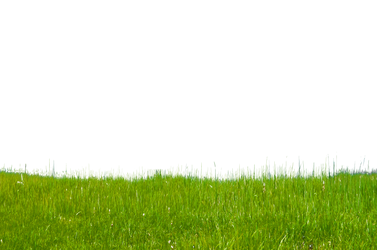 Grass on Hillside Stock Photo-0171-PNG by annamae22