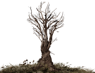 Roots-Tree Roots Dark Brownish PNG Stock by annamae22