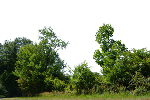 Trees and Bushs PNG Stock Photo 0070 Corrected by annamae22