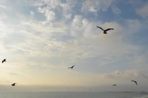 Birds in Flight Sky Stock Photo 0335 Orig by annamae22