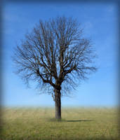 Tree in Field Background Stock 0232 Vignette FINAL by annamae22