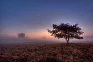morning landscape 42 by wienwal