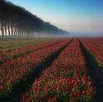 morning lanscape 53 by wienwal