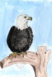 Eagle by Keyrye