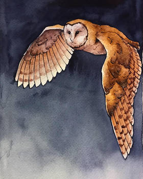 Barn Owl by RazzinAussi