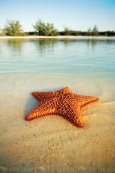 Starfish by SachaKalis