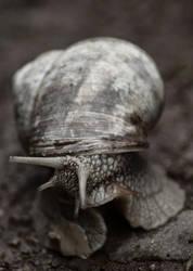 Snail by TomasKuzel