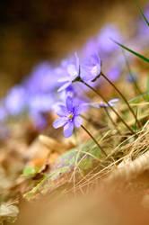 Spring by TomasKuzel