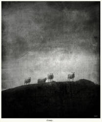 sheep. by BruhnA