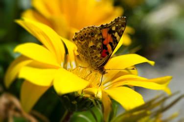 Butterfly by TaikutsunaMajo