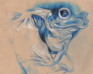 Frog by isekersky