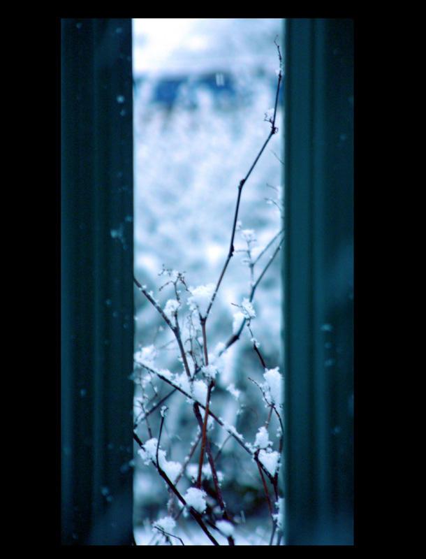 Snow through the bars by daemon-spyder
