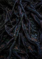 Untitled (roots) by PublicSecrecy