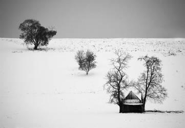 dream by Trifoto