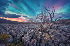 Limestone Pavement by Matthias-Haker