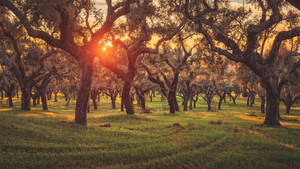 Sunset in Between the Cork Oaks by Matthias-Haker